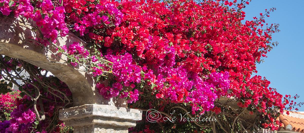 5 fiori estivi consigliati per balconi e terrazzi al sole for Fiori estivi perenni